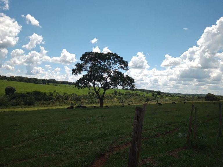 Vende-se Fazenda – 21 Alqueires